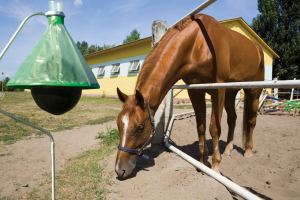 Offering solutions for the trapping of that biting horse fly (horsefly)  at your horse area